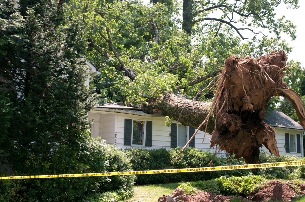 storm damage cleanup